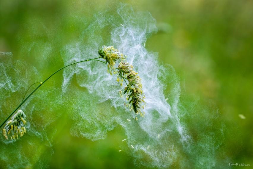 Pollen01-3
